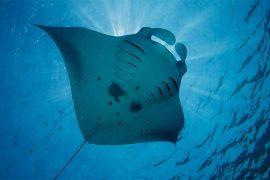马尔代夫水肺潜水