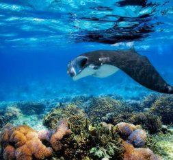 芙拉薇莉岛浮潜
