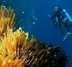 杜尼可鲁岛潜水中心