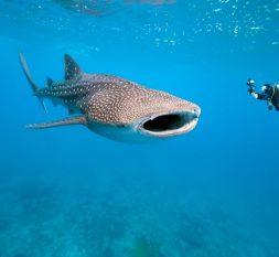 伊露岛潜水