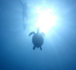 悦榕庄瓦宾法鲁岛房礁浮浅