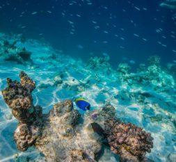 阿玛雅库达拉岛