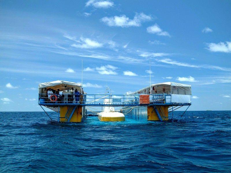 鲸鱼潜水艇(Whale Submarine)