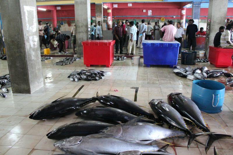 鱼市(Fish Market)